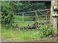 SO6724 : Buzzard on felled log by Pauline E