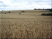 SU0017 : View across Handley Down by Maigheach-gheal