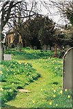 SU1012 : Alderholt: daffodils in St. James's churchyard by Chris Downer