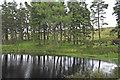 NY7843 : Reservoir by Helen Wilkinson