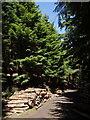 SX2297 : Track through Hams's Wood by Derek Harper