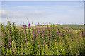 NJ8219 : Roadside flowers by Bill Harrison