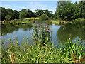 TG2137 : Chapel Road Fishing Lake by Evelyn Simak