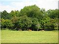TQ6328 : Fallow Deer, Wadhurst Park by Simon Carey