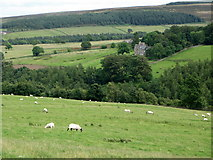 NY9449 : The valley of Beldon Burn (2) by Mike Quinn