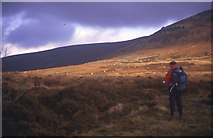 S2503 : Heath on Monavullagh Mountains by kevin higgins