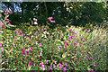 NZ0562 : Wild flowers by Helen Wilkinson