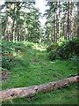TG1716 : A ride in Drayton Drewray woods by Zorba the Geek