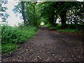 TG1426 : Track into the woods, off Holt Road by Zorba the Geek
