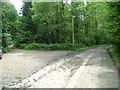 ST4193 : Back lane in woodland at Little Oak by Nicholas Mutton