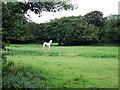 SN0819 : Pale horse by ceridwen