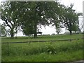 TF9830 : Parkland opposite Fulmodeston Hall by Nigel Jones