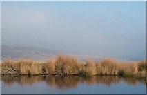 NY9834 : Dam on Bollihope Common by cathietinn