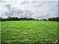 SD7712 : Pastures green by Alexander P Kapp