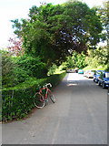 TQ3005 : The Ride, Preston Park by Simon Carey