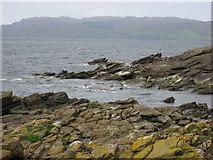 NR7103 : Atlantic Grey Seals on Sanda Island by Frederick Pollock
