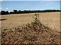 TG2431 : Harvested field near Boundary Farm by Evelyn Simak