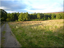 SK2767 : Beeley - Track view in direction of Beeley Plantation by Alan Heardman