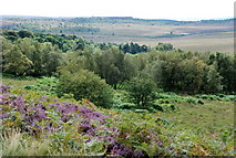 SK2775 : Woodland on the edge of Big Moor by Roger Temple