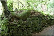 J4772 : Wall, Killynether Wood by Albert Bridge