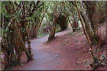 J4772 : Path, Killynether Wood by Albert Bridge