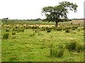 NY5274 : Rough grazing near Roadhead by Oliver Dixon