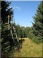NT3710 : Deer seat, Outerside Plantation by Richard Webb