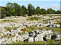 NY5219 : Limestone Pavement on Knipe Moor by mauldy