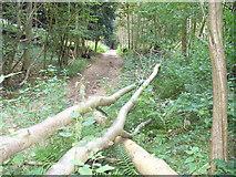 TQ0950 : Sheepwalk Lane by Colin Smith