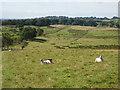 NY6065 : Hadrian's Wall National Trail, near Birdoswald by Oliver Dixon