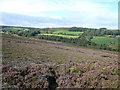 SK3167 : Harewood Moor by Alan Heardman