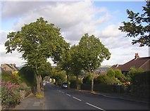 SE1614 : Kaye Lane, Almondbury by Humphrey Bolton