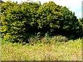 ST5659 : Birdwatching hide, Chew Valley Lake, Somerset by Brian Robert Marshall