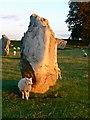 SU1069 : Sheep, shadows and standing stones, Avebury Circle, Wiltshire by Brian Robert Marshall