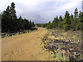 NY5685 : Forestry road by Walter Baxter