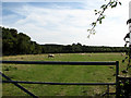 TG0032 : View SE across sheep pasture by Evelyn Simak