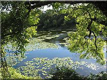 SR9694 : Bosherston Lily Ponds by Pauline E