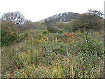 SX0058 : Scrubland by the china clay tip by Jonathan Billinger
