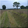 TA0335 : Jillywoods, north of Cottingham by Paul Harrop