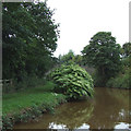 SJ7459 : Trent and Mersey Canal, Wheelock, Cheshire by Roger  Kidd