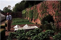 SU3370 : Harry Dodson in the Victorian Kitchen Garden by Adrian Cable