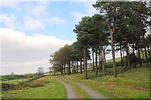 SK2077 : Coniferous woodland on Bretton Moor by Roger Temple