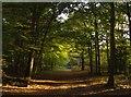SU6680 : Evening walk through Valentine Wood by Graham Horn