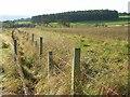 NT9906 : Northmoor Plantation by Andrew Smith