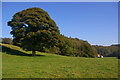 SO4675 : Oak tree with cottage in background, on edge of woods by Ian Capper