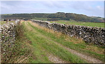 SK2076 : Farm track off Tideswell Lane by Roger Temple