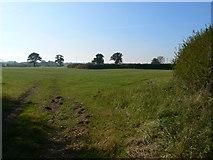 SJ4324 : Field at Marton by Eirian Evans