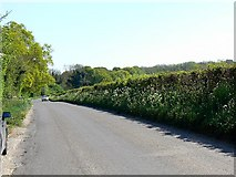 SU6230 : Old Park Road, near Ropley Dean by Brian Robert Marshall