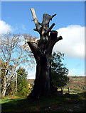SK2957 : Dead tree at Willersley Castle by J147