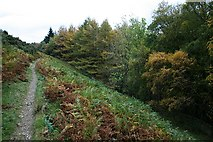 NY4714 : Footpath Behind Forestry by Steve Partridge